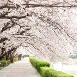 【桜の名所】関西のお花見スポットランキング!人気No.1はどこ?