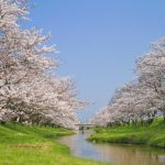 東海地方で人気の桜の名所は?お花見スポットランキングTOP27!