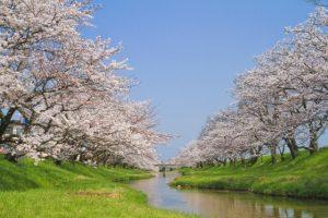 【桜の名所】東海地方のお花見スポットランキング!人気No.1は?