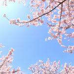 沖縄で人気の桜の名所は?お花見スポットランキングTOP7!